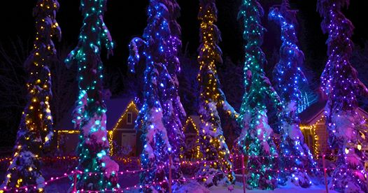 Christmas lights on trees at Gardens Aglow at the Coastal Maine Botanical Gardens near our hotel in Wiscasset.